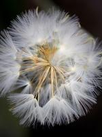 24-Blomsterfrön.